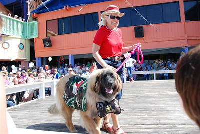 Ellie came in 3rd (behind two well known rescues) at the costume contest.  She has been living it up on South Padre Island for the winter!!  what a cutie!