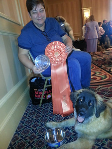 Rainbow took Best Baby Puppy at the National Specialty 2014