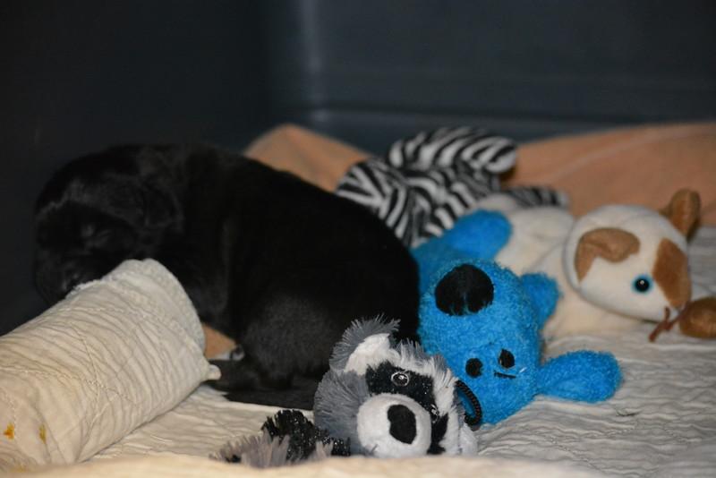 Duke and his litter mates :o)