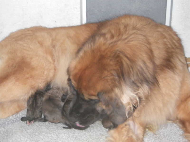 kellie is such a good momma.  she loves her babies