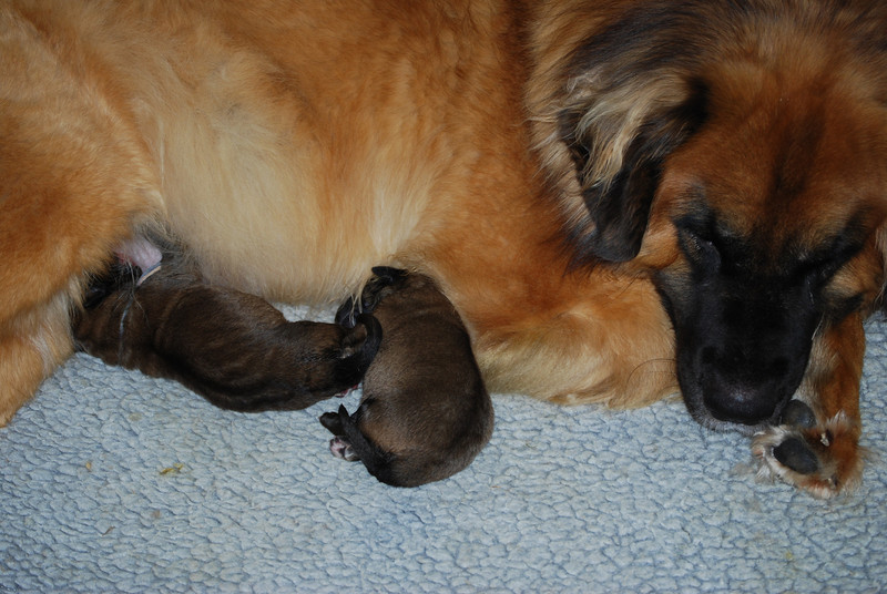 momma and her babies (Meg & Jo)