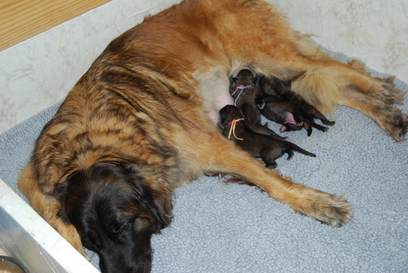 momma and babies