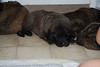 what sweet puppies!! 4 wks old