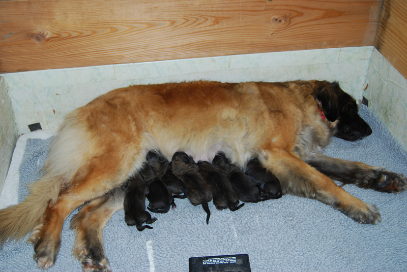 seven beautiful babies...  5 girls and 2 boys born on 4/26/10