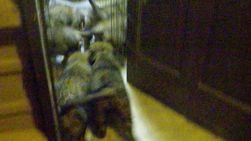 puppies heading over to eat their food...7wks old