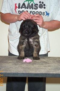 pink girl front 4 weeks
