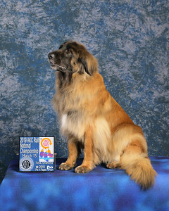 Dog Show Image, Dog Agility, Dog Obedience or Rally, Portrait or Candid