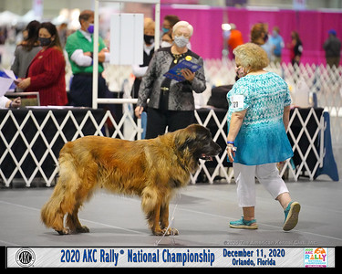 Dog Show Image from 2020 AKC Rally National Championship or 2020 AKC National Obedience Champioship