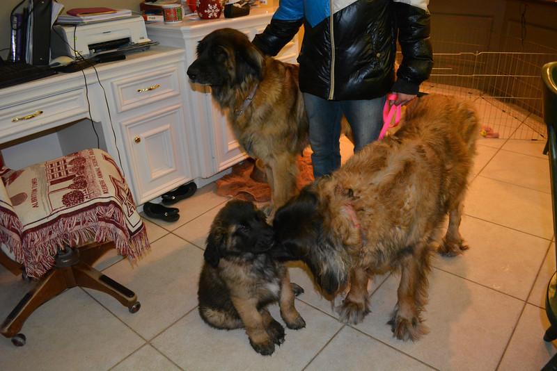 mamma Storm and grandma Vegas with Ziva