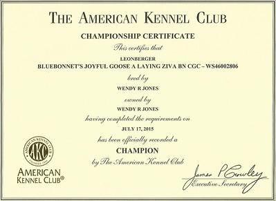 AKC CHampionship
