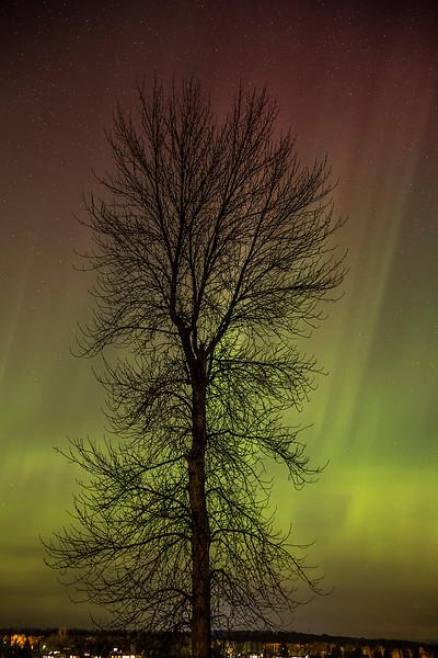 Aurora over Cedarville Bay
