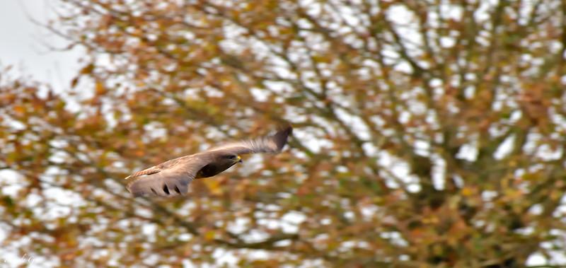 In flight ; En vol