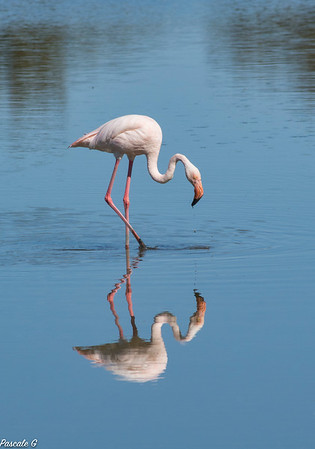 Miroir , mon beau miroir ...-