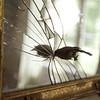 L'oiseau narcissique