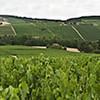 Vignes autour d'Essoyes dans l'Aube