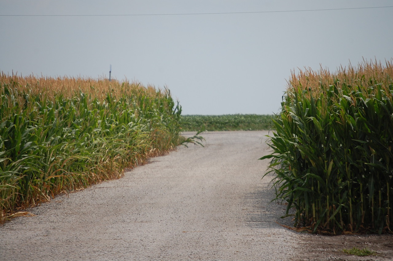 Cornfield Road near Bloomington IL
