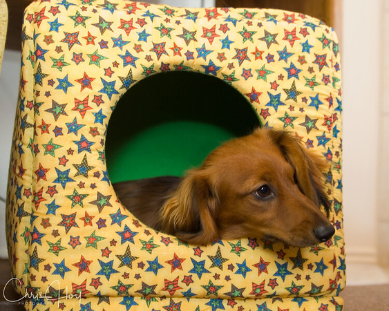 Pup in a cube (Spencer)