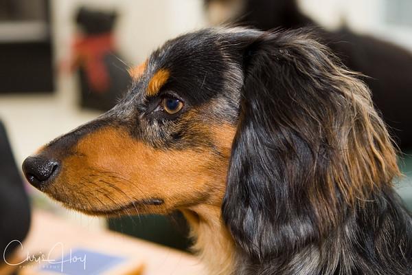 Profile of Cooper