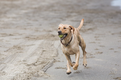Gracie loves running on the beach.