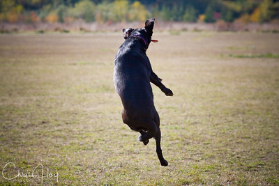 Maggie catches AIR!