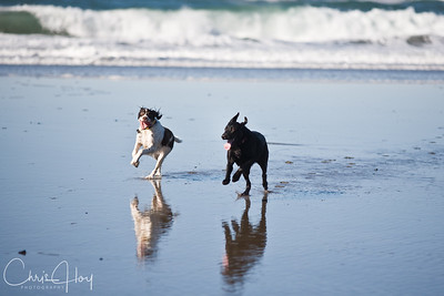 Maggie & Kona loving life at Pacific City