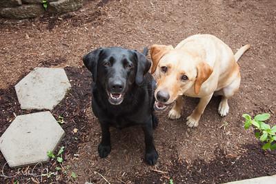 My girls - Maggie & Gracie