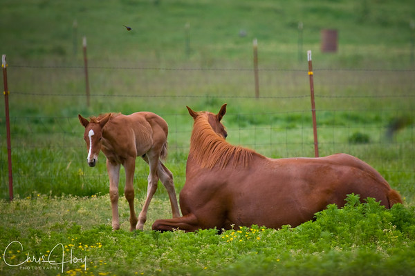 Foal and Mother