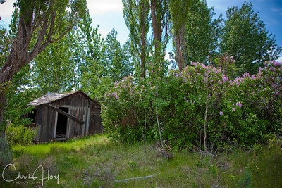 Old Homestead near Shaniko, Oregon
