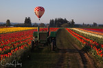 Wooden Shoe Tulip Festival : See what I\'ve Captured lately here - The most recent work of Chris Hoy