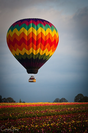 Tulips and Hot Air Balloon at the Wooden Shoe Tulip Festival