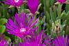 Flower at the Oregon Garden