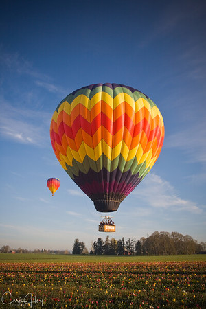 Hot Air Balloon over the Wooden Shoe Tulip Farm, Woodburn, Oregon