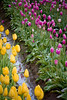 IMG_3980 Wooden Shoe Tulip Festival, Woodburn, Oregon Tulips, Wooden Shoe