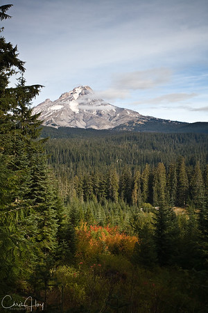 Mt. Hood with a little Fall Color showing