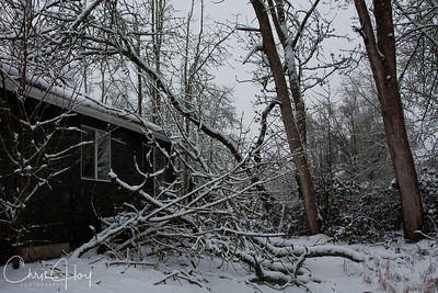 Downed Tree on my house