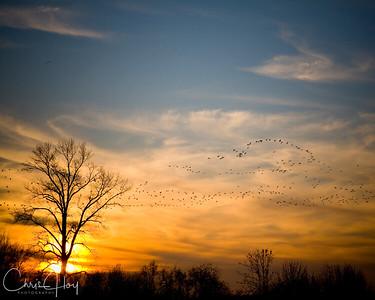 Sunset Over Ankeny NWR