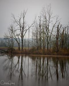 Pintail Marsh, Ankeny NWR