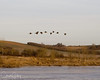 Geese flying over the frozen Baskett Slough at 7:30 AM and 20 degrees. BRRR