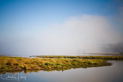 Fog over Ridgefield National Wildlife Refuge