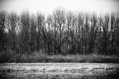 Monochrome Trees at Ridgefield National Wildlife Refuge