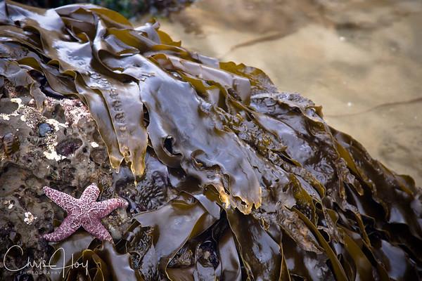 Tide Pools, Cape Kiwanda - Pacific City, Oregon