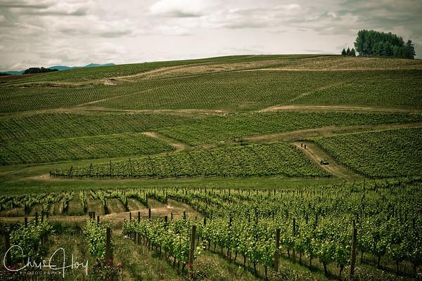 Vineyard, West of Salem, Oregon