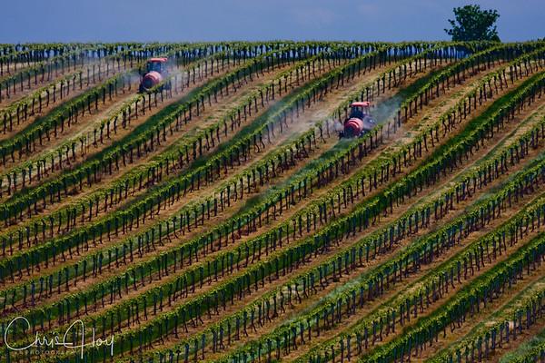 Firesteed Winery, Rickreall, Oregon
