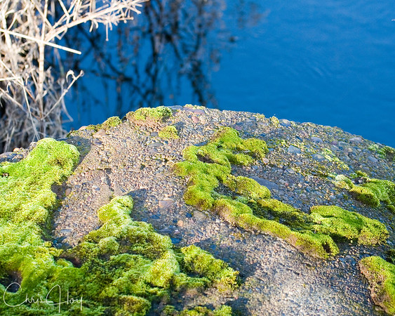 Relief Map or Moss Growing on Culvert?