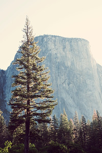 El Capitan, Yosemite Valley, Yosemite National Park, California