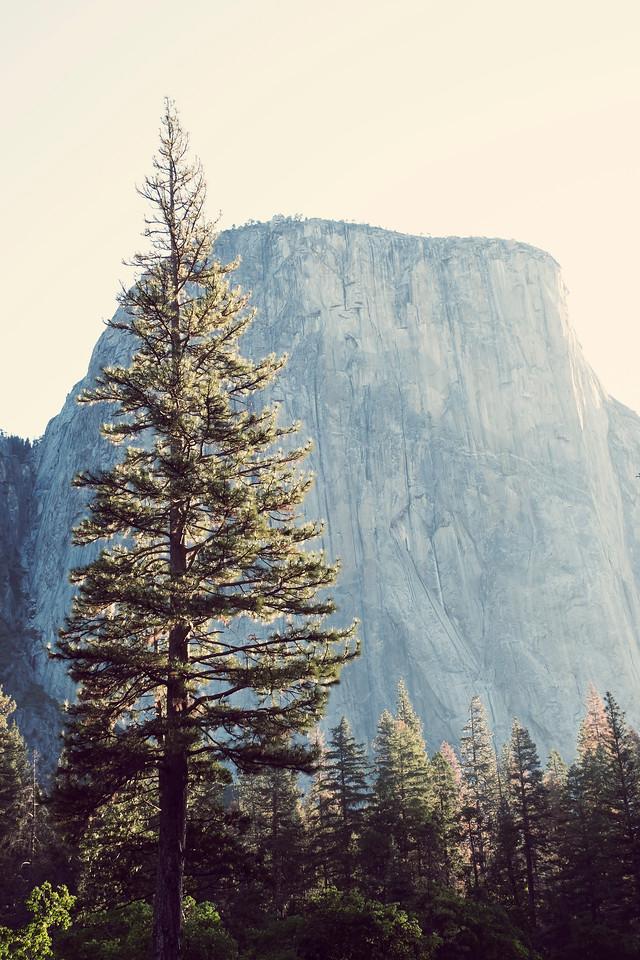 El Capitan, Yosemite Valley, Yosemite National Park, California