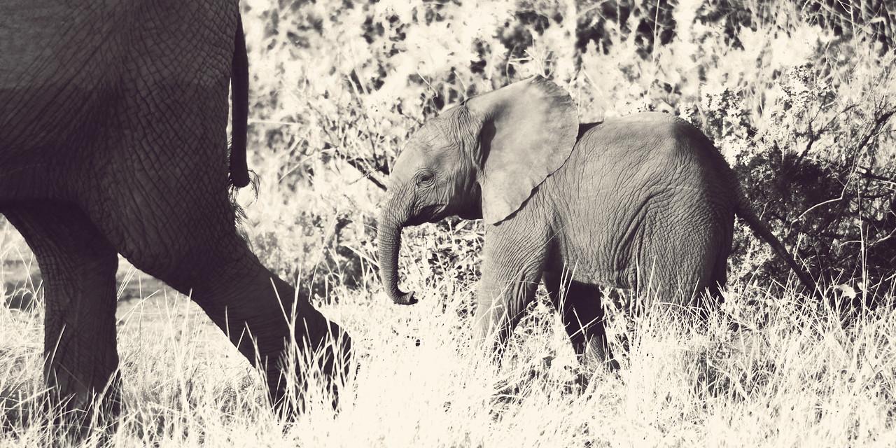 Elephant II, Samburu National Reserve, Kenya
