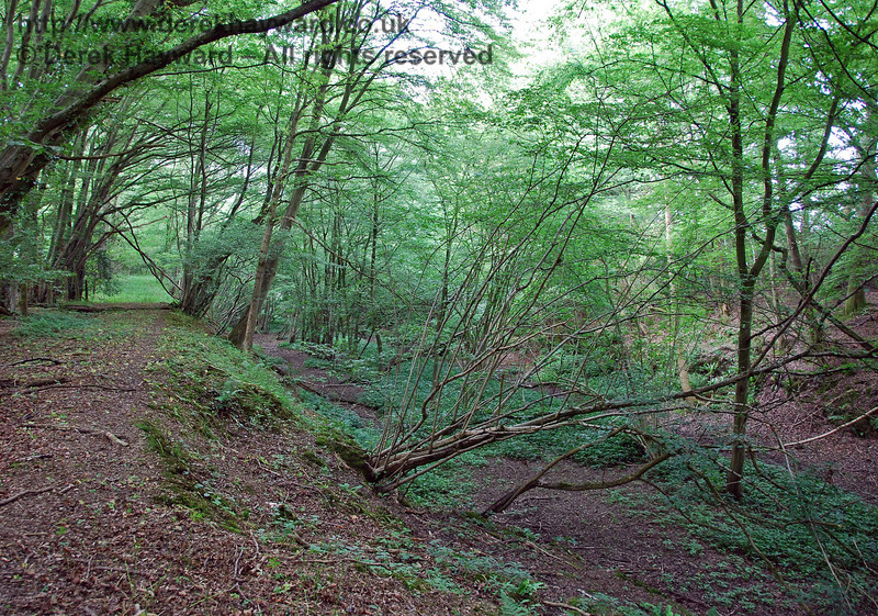 A final view of Cinder Farm cutting, leading north to the tunnel.  This cutting is impassable and the tunnel cannot be reached from this direction owing to thick (and very unfriendly) undergrowth. Ouch!