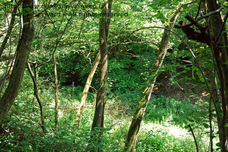 A second view looking north down into the cutting.  The brambles and stinging nettles are flourishing down there.