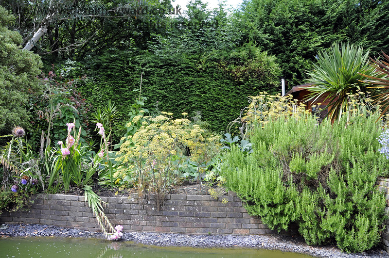 More of the lovely landscaped garden at Newick & Chailey. 28.07.2014 11374